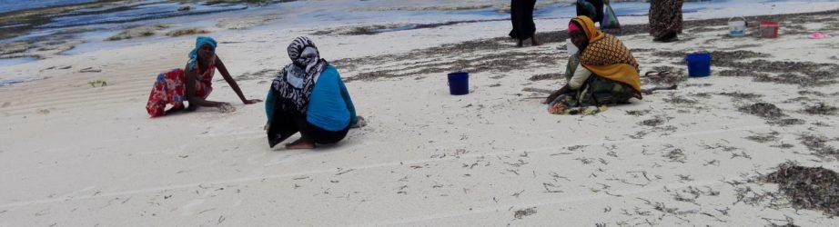 Un mercato in paradiso: fare la spesa in spiaggia a Zanzibar