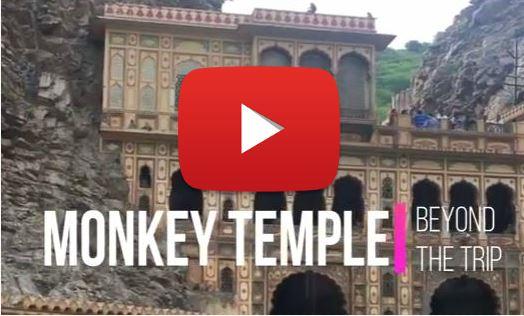 tempio scimmie india jaipur