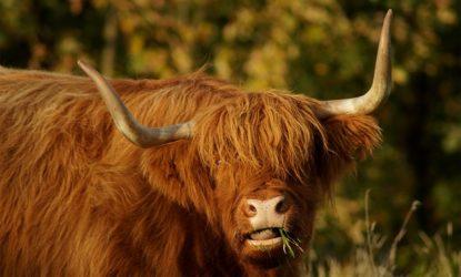 Viaggio in Scozia – Perché visitare la Scozia: 10 motivi per innamorarsene