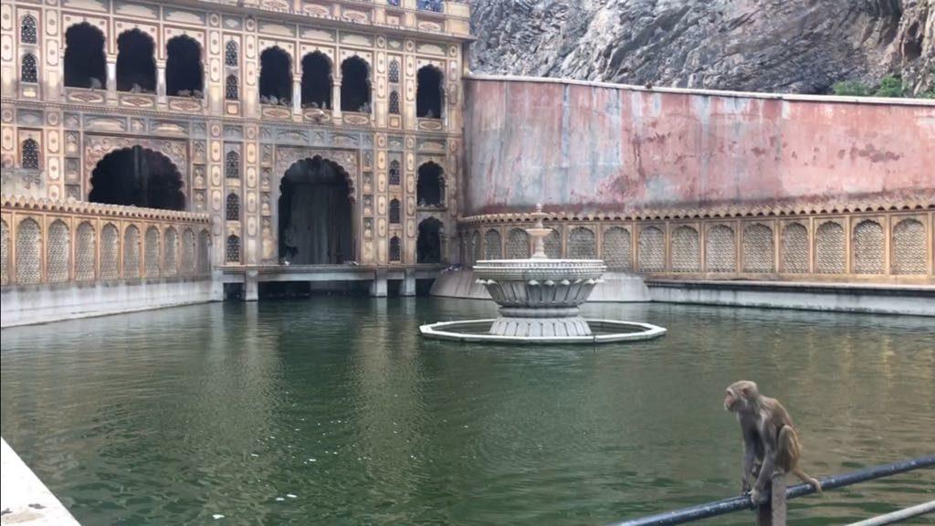 tempio delle scimmie Jaipur