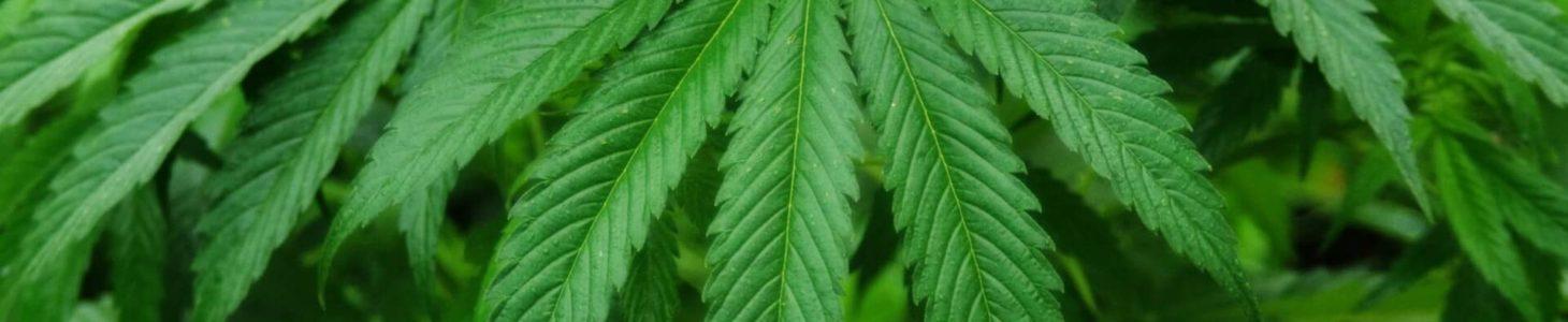 Fumare erba in Asia: le leggi sul consumo di marijuana