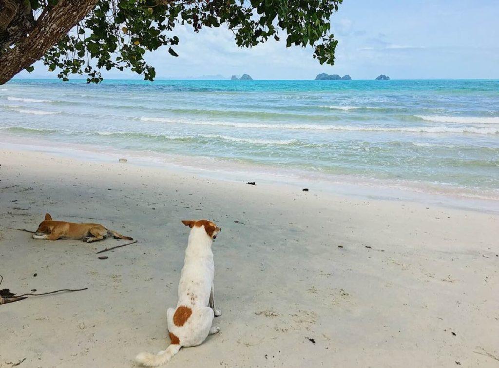 dove non andare in Thailandia